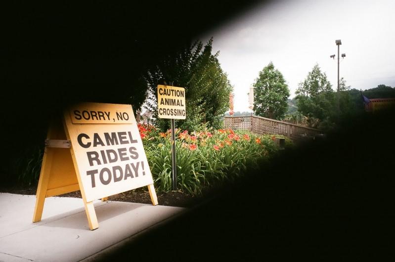 camelrides
