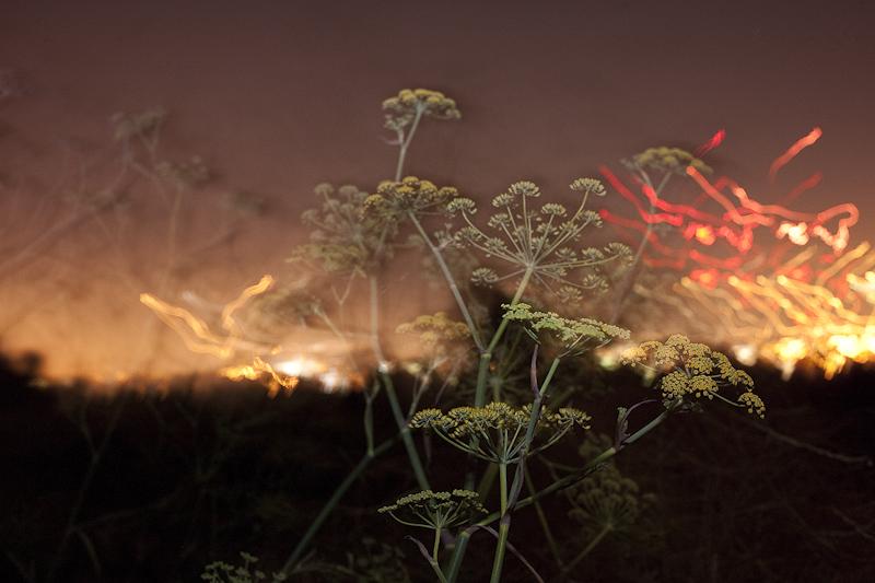 bonfire_19