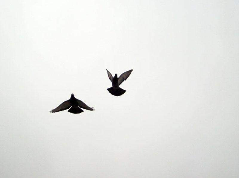 Bird Freedom | www.imgkid.com - The Image Kid Has It!
