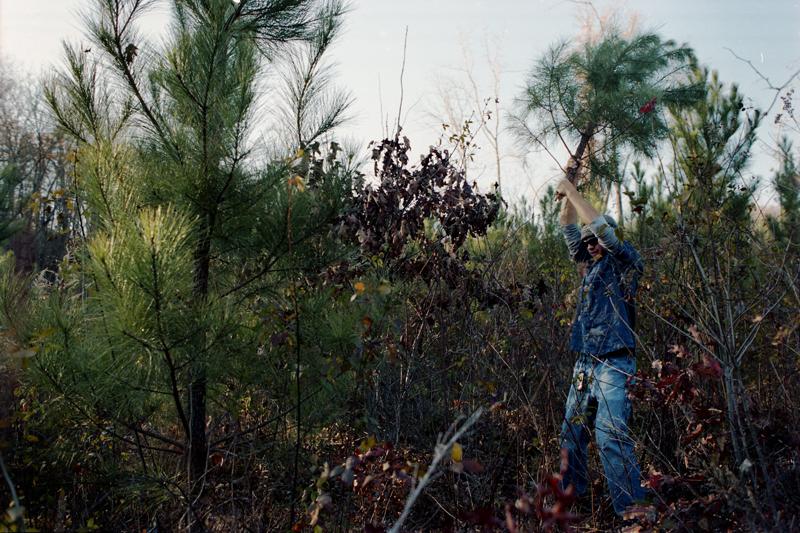 tree heist03