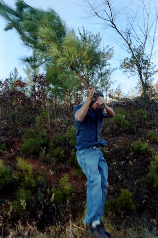 tree heist04