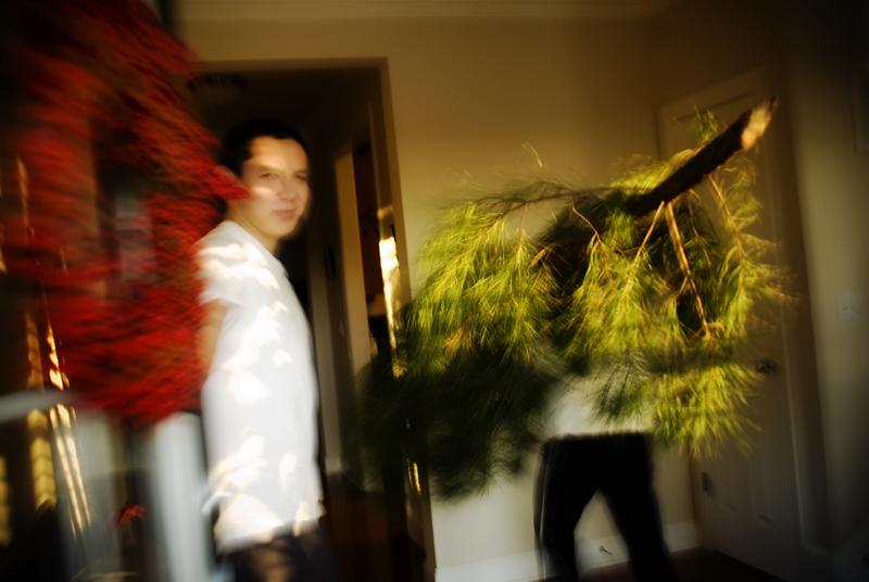 tree heist07