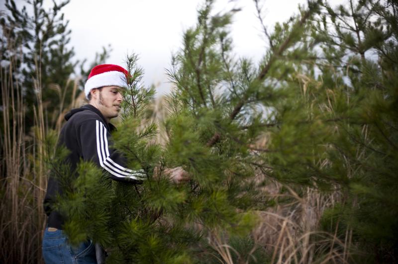 tree heist12