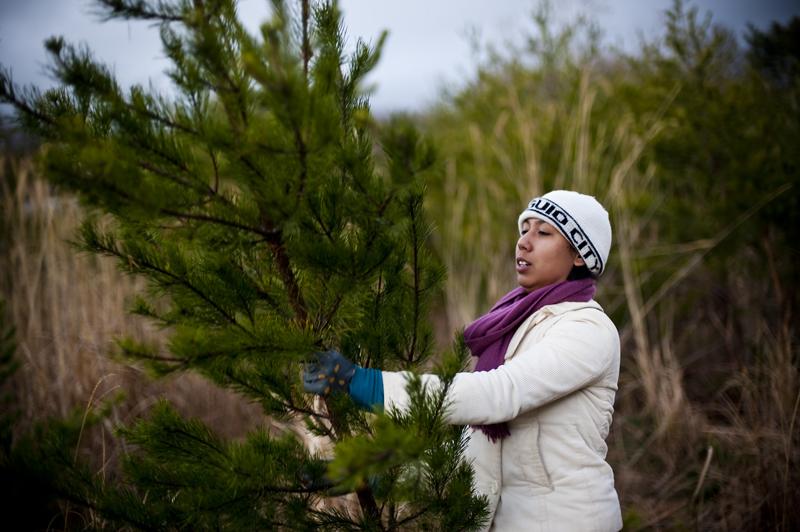 tree heist15